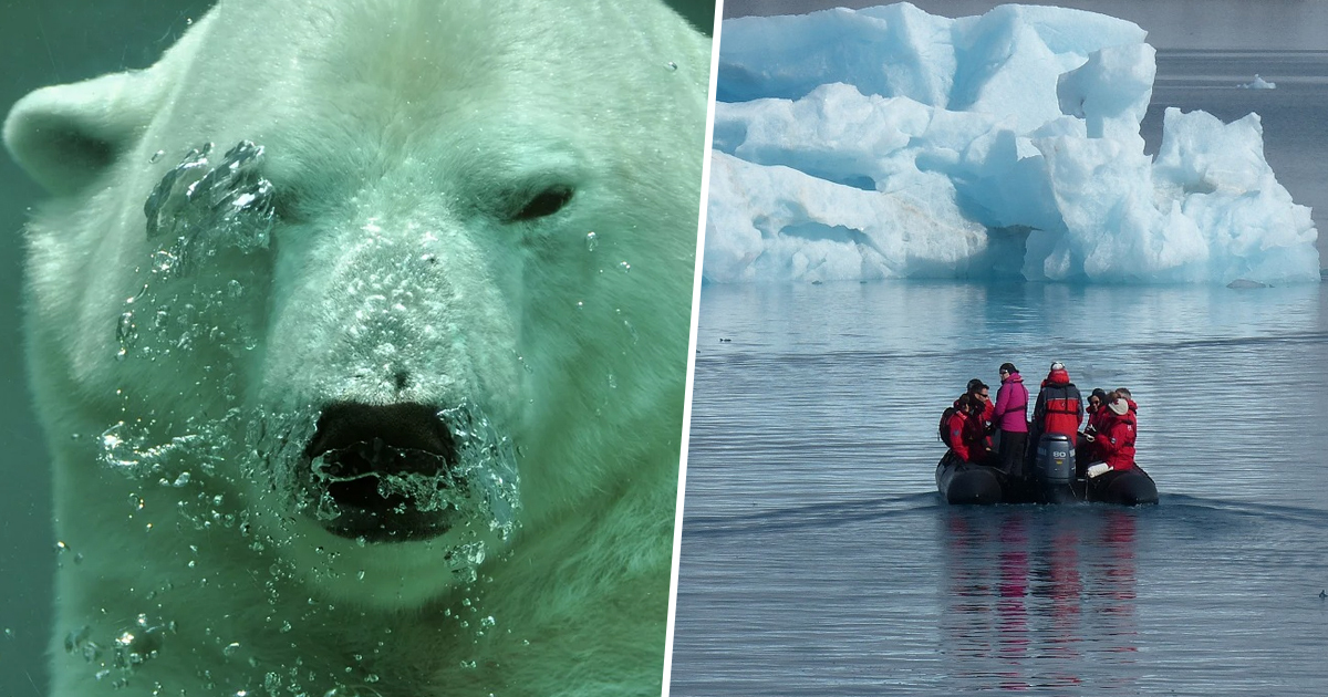 Scientists discover new chlamydia cousin deep under Arctic Ocean