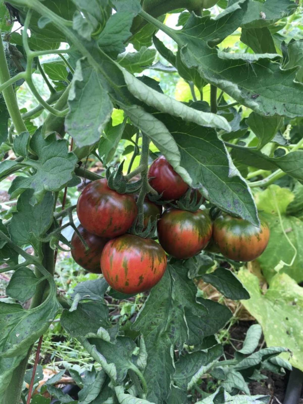 COVID-19: Food security grows by knowing where your seeds come from