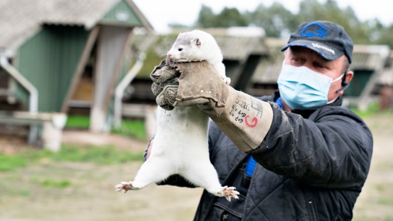COVID-19 outbreaks at foreign mink farms have fur breeders on high alert