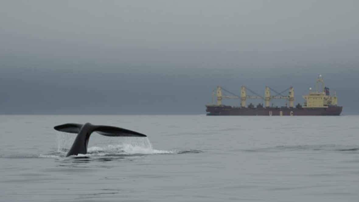 Slowing down big ships not enough to protect right whales from fatal strikes: study