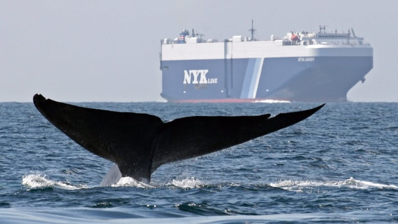 Scientists say noise pollution is harming sea life, needs to be prioritized