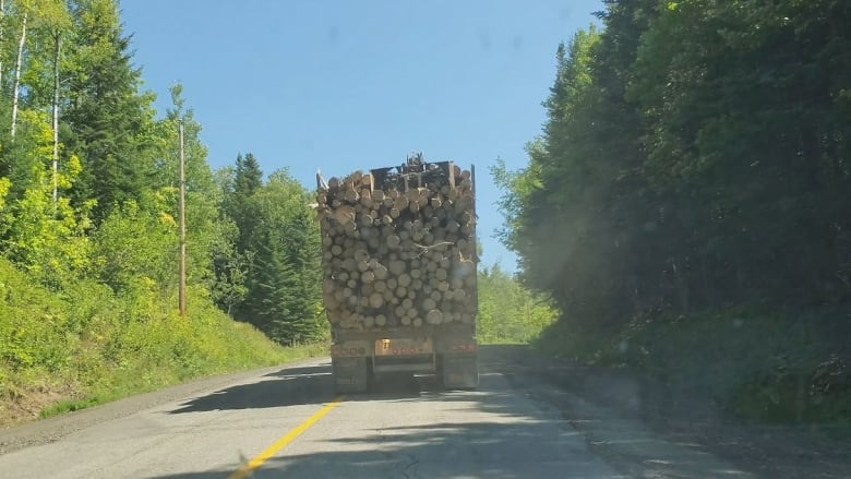 Canadian forestry companies in U.S. environmental group's report say criticisms oversimplified, misleading