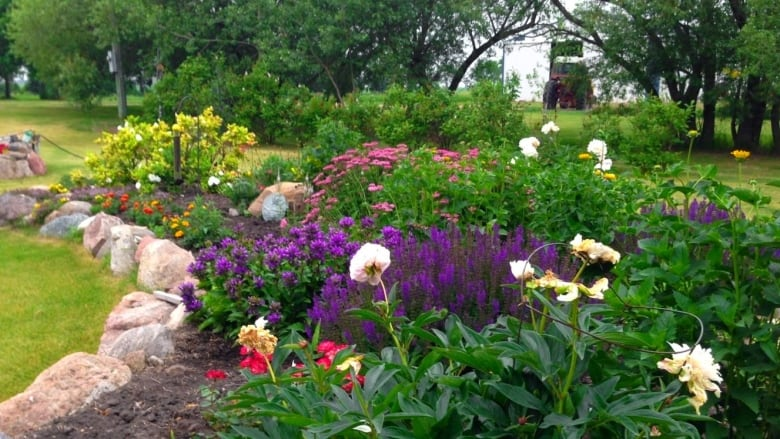 Plants bring peace to gardeners grappling with grief, depression and anxiety