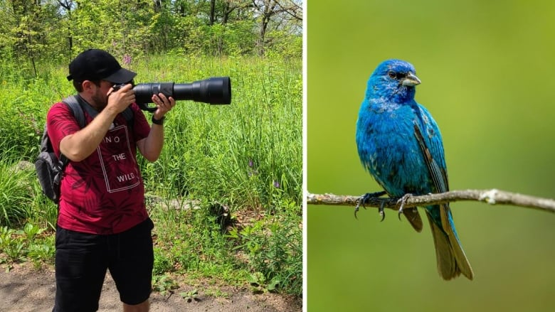 How birding's pandemic popularity is expanding data collection for science